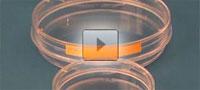 Video-Film Zellkulturschalen - Faust
