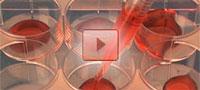 Video Serologische Pipetten